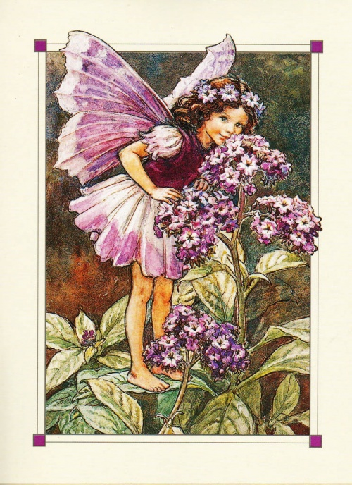 Феи цветов от Сесиль Мэри Баркер (123 работ)