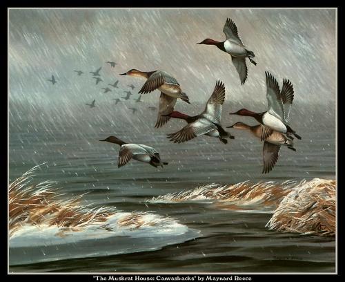 Картины Живой природы. Птицы (109 работ)