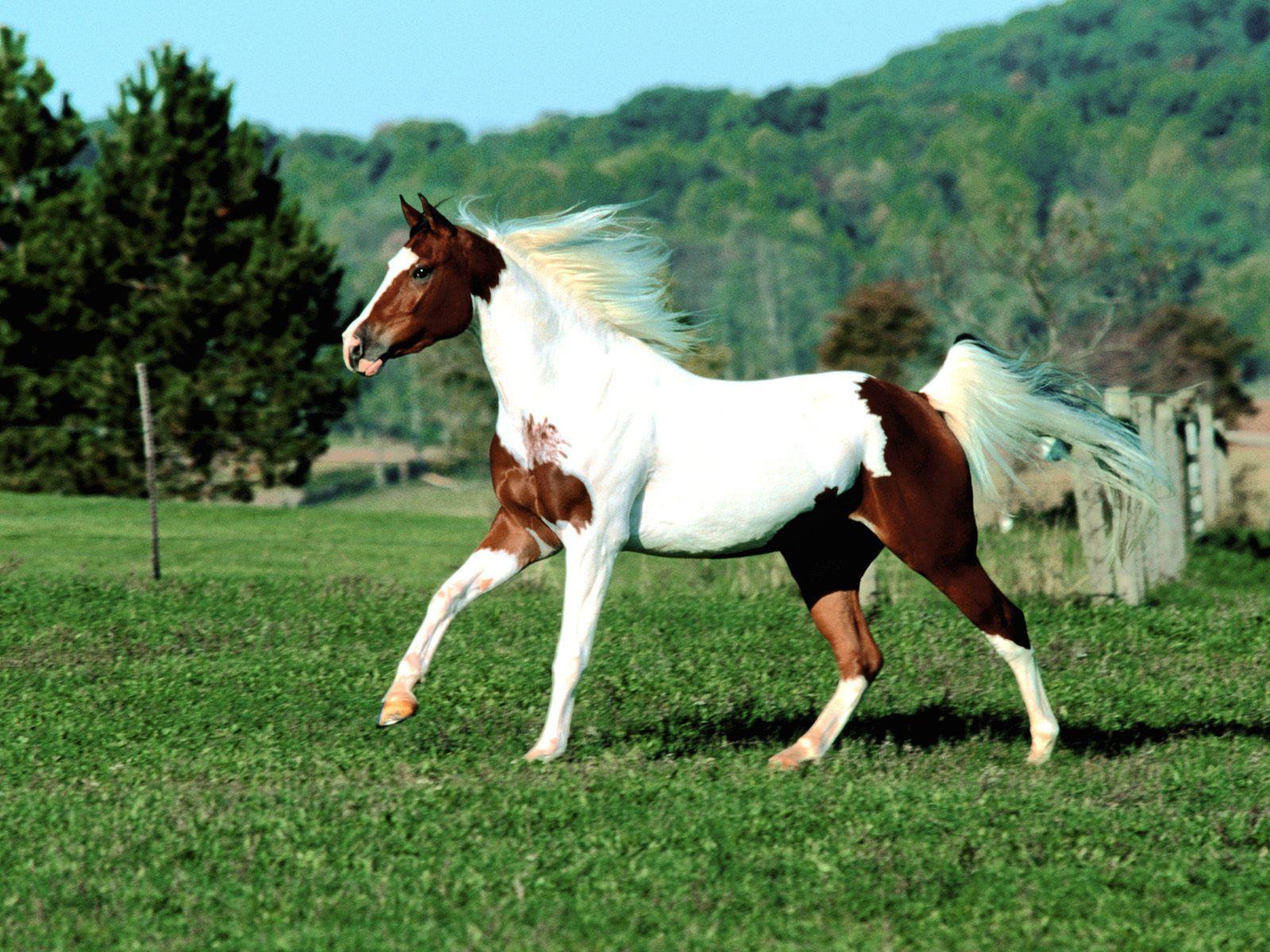 Ver fotos de caballos de mar 63