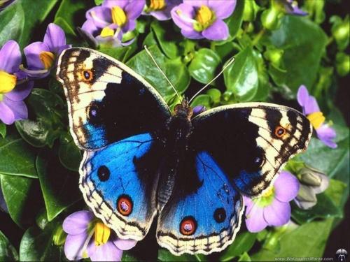 Красивые фото разных видов бабочек (154 фото)