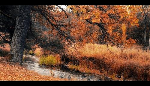 Фото природы от Евгений Т. Город Киев (47 фото)