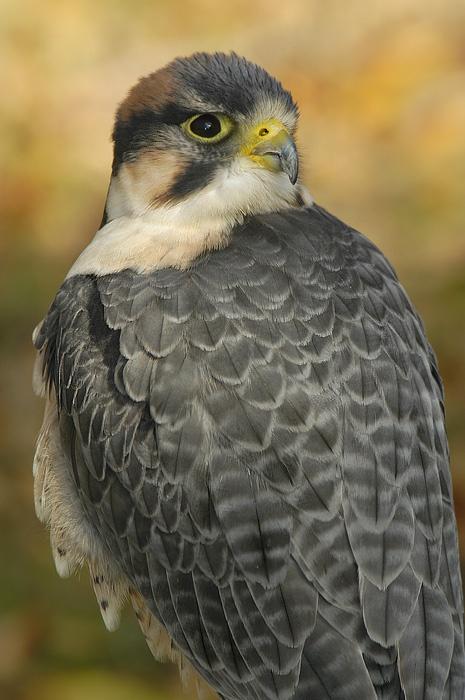 Фотографии птиц (27 фото)