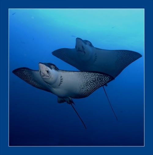 Красивые фото подводного мира (32 фото)