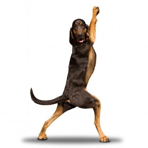 Собаки спортсмены - календарь от Dan Borris (14 работ)