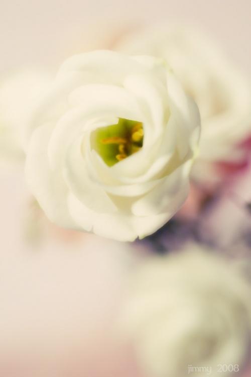 Красивые изображения на тему Цветы (51 работ)