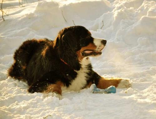 Photos of animals #2 - Dogs (51 фото)