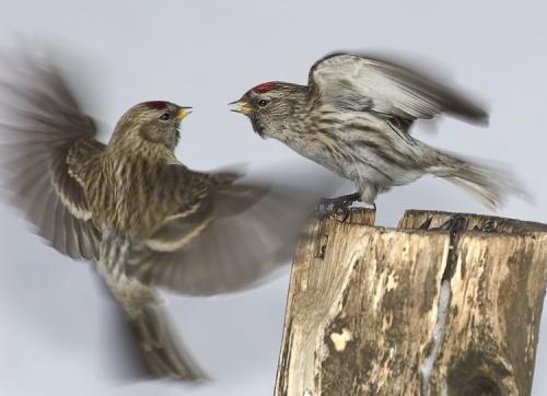 Photos of animals #3 - Birds (69 фото)