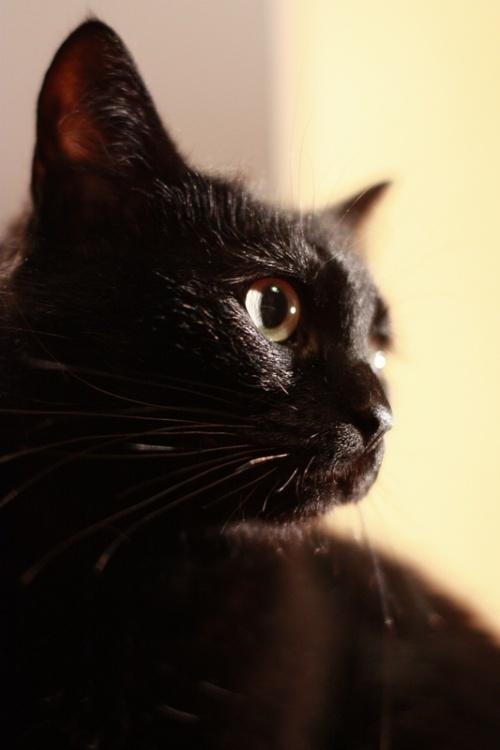 Photos of animals #7 - Cats (55 фото)