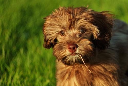 Photos of animals #6 - Dogs (55 фото)
