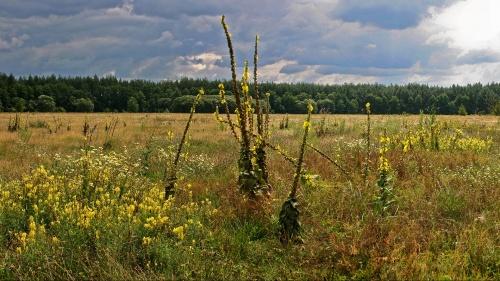 Панорамы Ярослава Коваля (авторское) - part 2/3 (20 фото)