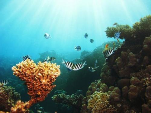 """Фотографии """"Подводный мир"""" (125 фото)"""