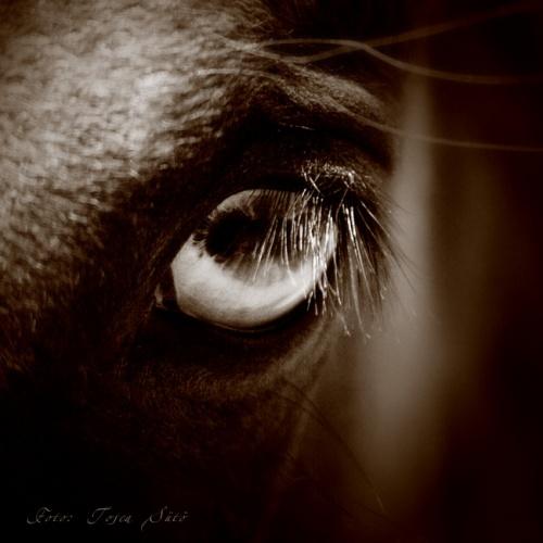 Фотограф Tosca Suto. Лошади (128 фото)