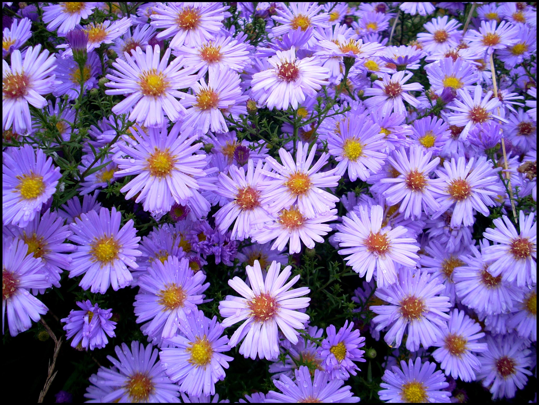 Фото всех поздних цветов