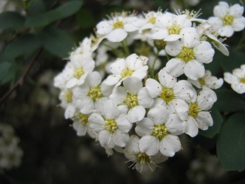 1500 фото различных цветов (254 фото) (5 часть)