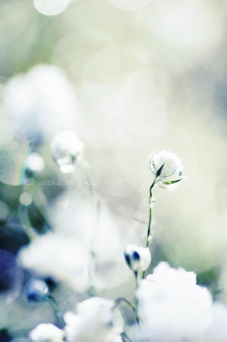 50 лучших фотографий цветов (51 фото)