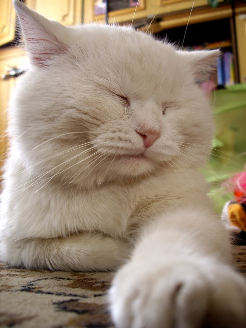 Домашние кошки - HQ Foto (ч.6) (18 фото)