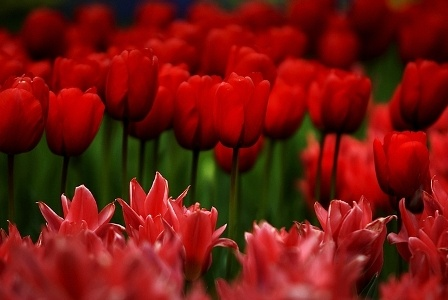 1500 фото различных цветов (364 фото) (3 часть)