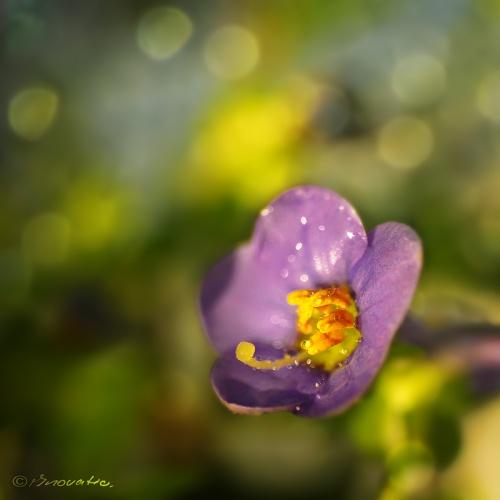 1500 фото различных цветов (199 фото) (4 часть)