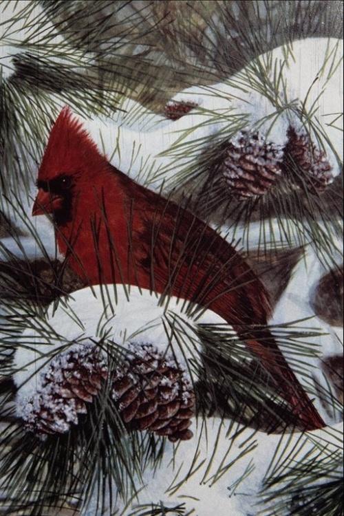 Рисованные изображения птиц (51 работ)
