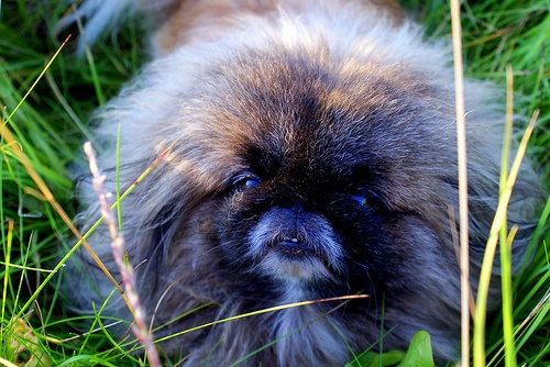 Photos of animals #9 - Dogs (70 фото)