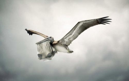 Новые работы Guido Argentini (44 фото)