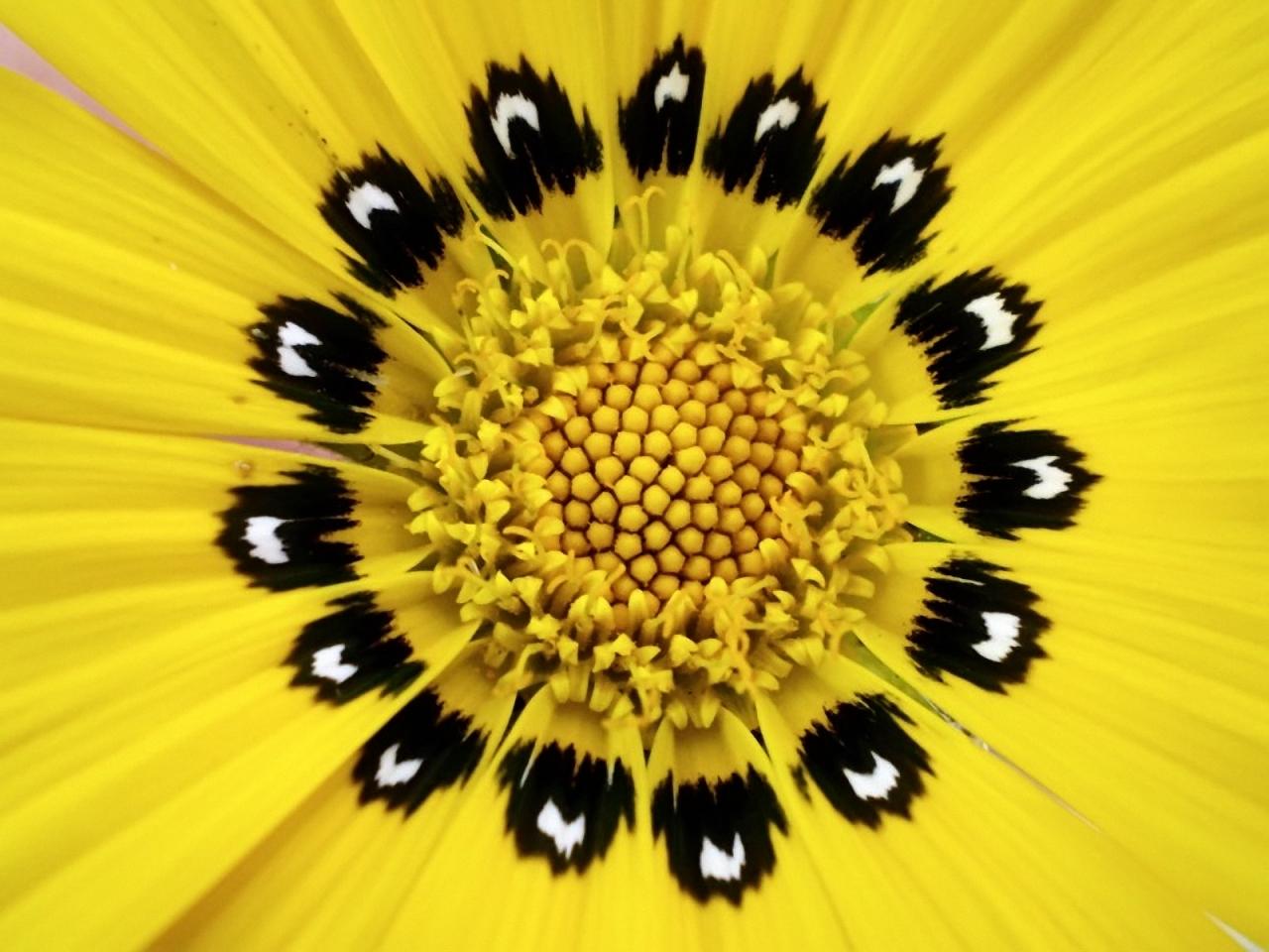 Макрофотографии цветов лучшие 6