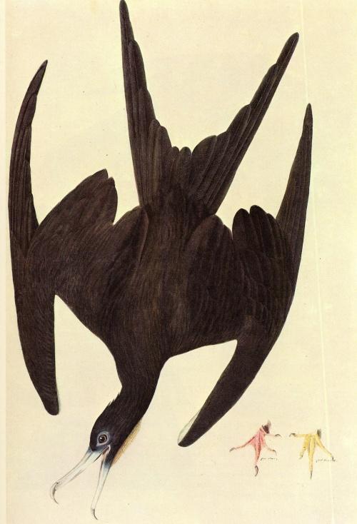 Батик Наташи Фуко (45 работ)