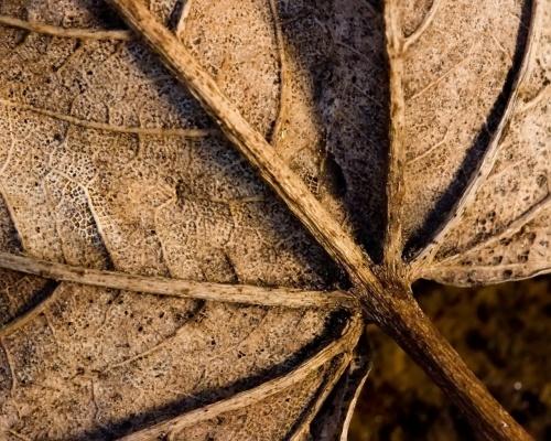 Подборка макро Фото (77 фото)