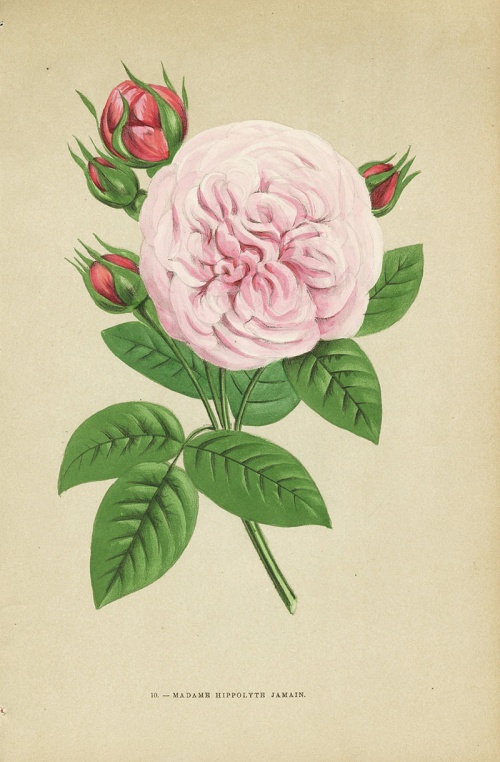 Коллекция старинных принтов. Jamain Rose Prints 1873 (54 работ)