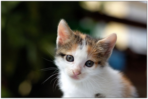 Кошки... Много кошек. Фото разных авторов (228 фото)