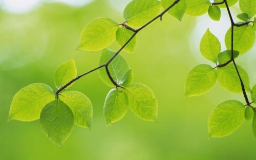 Фото молодой зелени (33 фото)