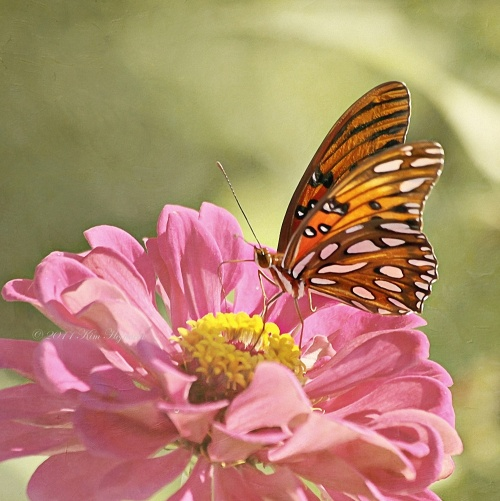 Нежные фото цветов Kim Hojnacki (50 фото)