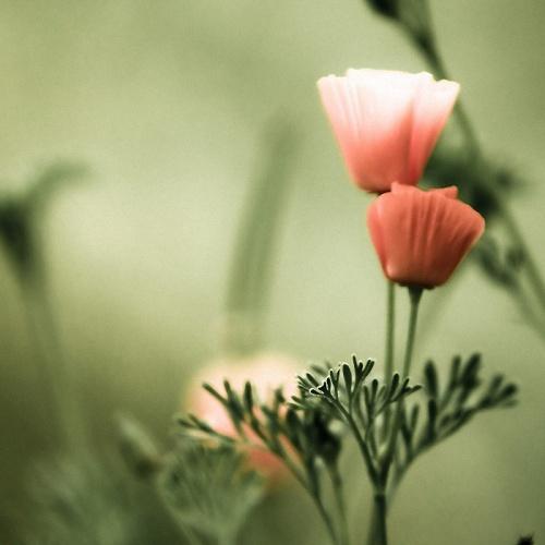 Красивые фотографии цветов от Harold Lloyd (30 фото)