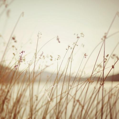 Нежные, милые, и солнечные фотографии от Lisa Epp (41 фото)
