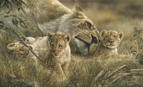 Животный мир глазами Denis Mayer Jr. (24 работ)