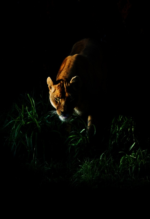 Фотограф Miguel Angel de Arriba Cuadrado. Фото дикой природы (379 фото)