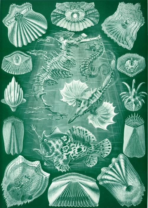 Эрнст Геккель. Красота форм в природе, 1904 (100 работ)