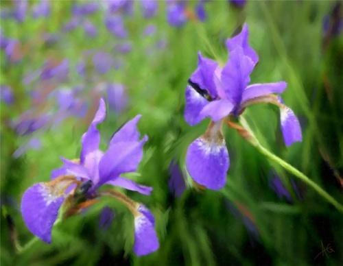 Цветы Alberto Guillen (45 работ)
