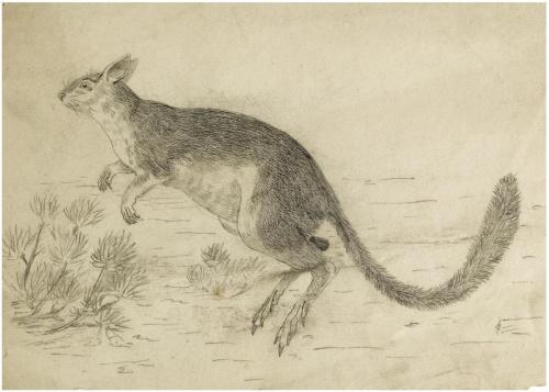Детский иллюстратор Beatrix Potter (221 работ)
