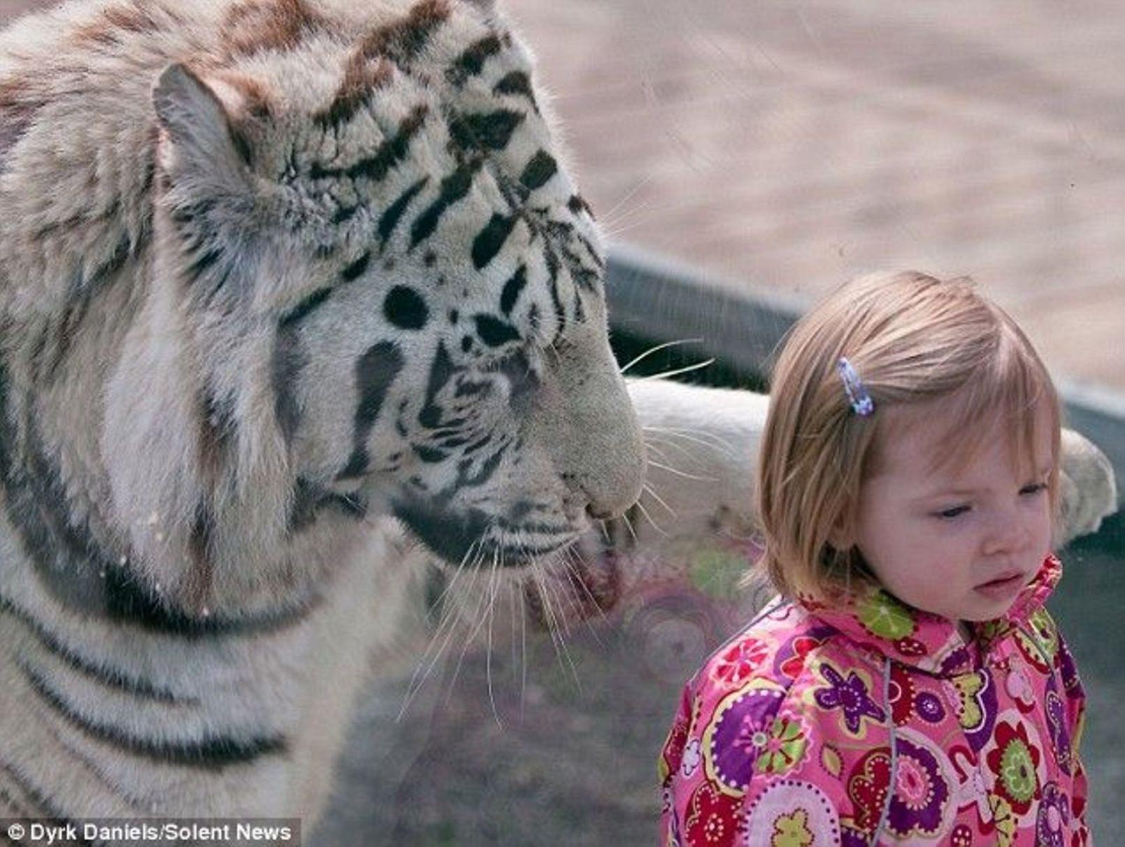 Дети и хищники фото