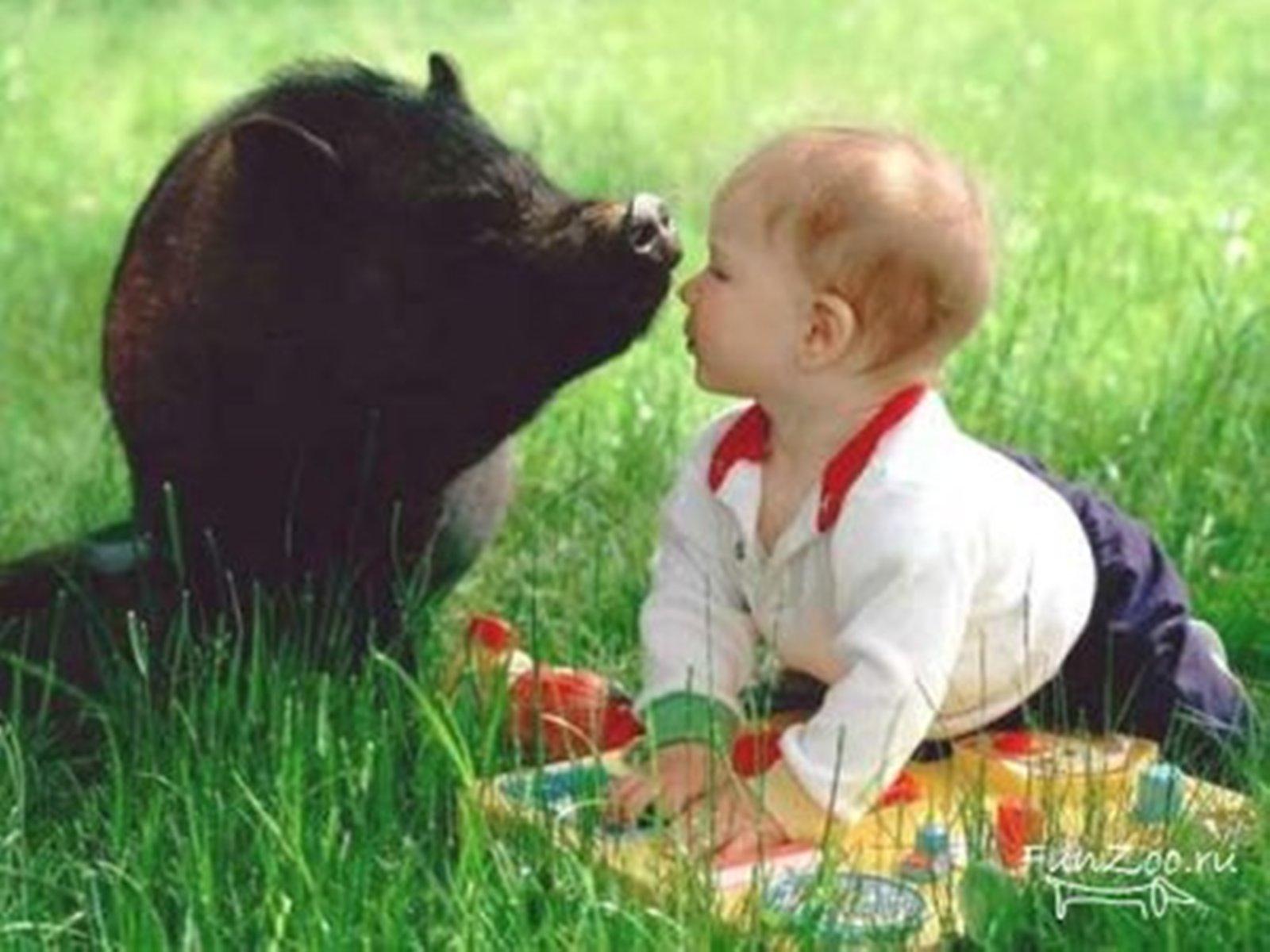 Животные фото для детей 6