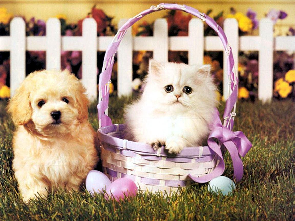картинки с красивыми и милыми котятами и щенками