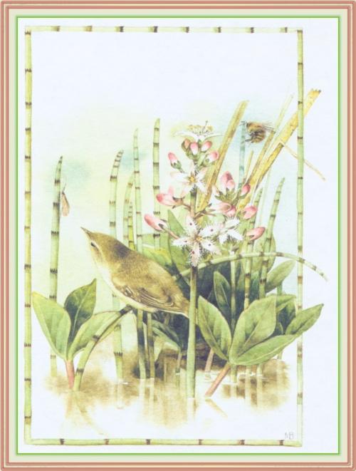 Художник-иллюстратор Bastin Marjolein (164 работ)