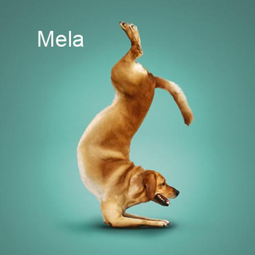 Merry Dogs | Веселые Собаки (13 работ)