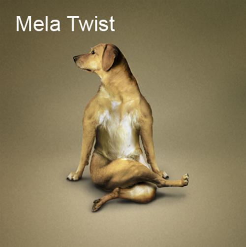 Merry Dogs   Веселые Собаки (13 работ)