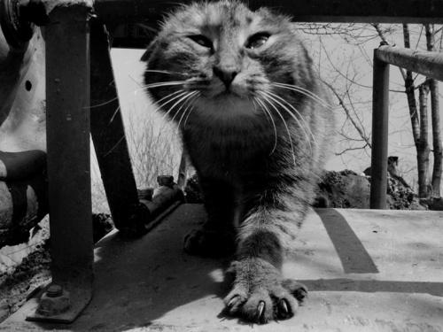 Забавные кошки (46 фото)