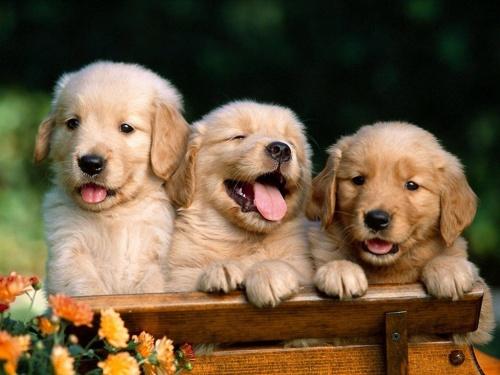 Забавные кошки и собаки (72 фото)