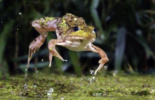 Photos of wildlife. Часть 1. Скотт Линстед (Scott Linstead) (55 фото)