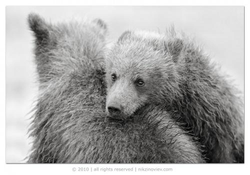 Photography Nikolai Zinoviev (171 фото)
