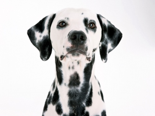 Забавные кошки и собаки 2 (39 фото)